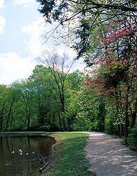 A trail.