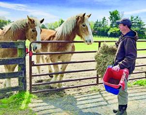 Man feeding horses.