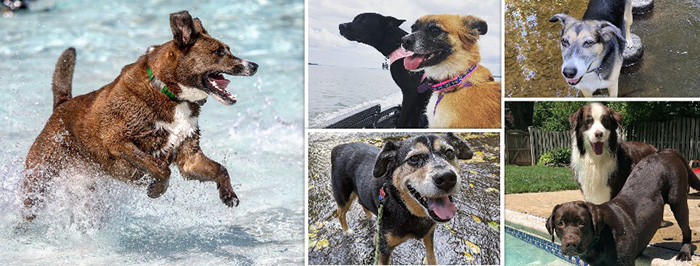 Dogs playing in the water.